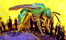 [blue-green-bee.png 23k]